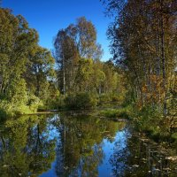 вода. отражение, деревья :: Александр Потапов