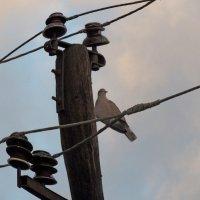 О птичках. Реиркарнация неудачливого электрика... :: Дядюшка Джо