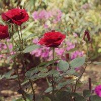flowers :: Алина Якушина