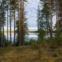 Лесное озеро :: Борис Устюжанин