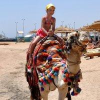 – Э-ге-гей! Смотрите люди – Я катаюсь на верблюде! :: Виктор Филиппов