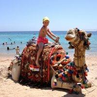 Покатай меня верблюд! :: Виктор Филиппов