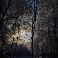 Зимний день :: Ирина Емельянова
