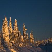 Зимнее утро :: Artyom S