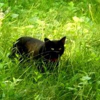 кот который гуляет сам по себе :: Наталья Савенко