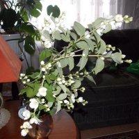 Цветок :: Александр Гриценко