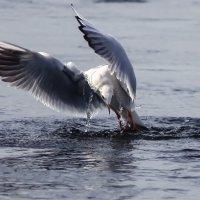 Чайка :: Денис Матвеев