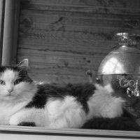 Сразу видно.москвич! :: Катерина Творогова