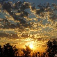 Рассвет в поле 4 часа утра :: Евгений Мишуров