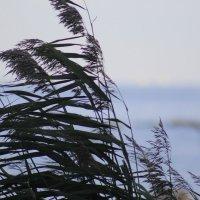 растения :: георгий назаренков