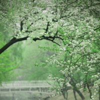Beautiful Spring :: Дмитрий Кудрявцев