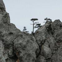 В горах Крыма :: Светлана Карнаух