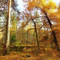 Золотая осень :: Андрей Снегерёв