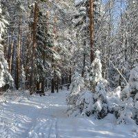 Пришла зима. :: Наталья