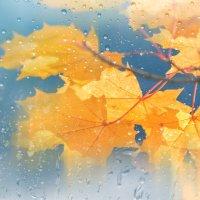 Осень...Идут дожди :: Ольга Соколова