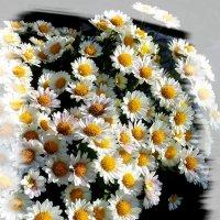 Цветы ноября. :: Зоя Чария