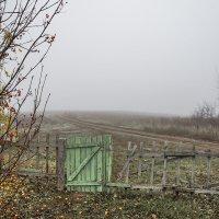 Туман застелил густо... :: Наташа Баранова