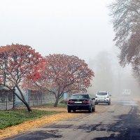 Туман в городке. :: Владимир Ф