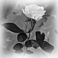 Можно стереть любовь из памяти. Выкинуть из сердца — это уже другая история...... :: Tatiana Markova