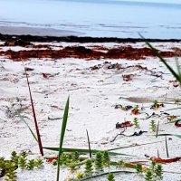 Осеннее побережье :: Tatjana