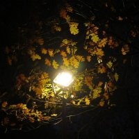 Вечером в парке :: Дмитрий Никитин