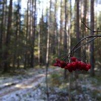 лес :: alpman виктор