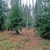 В лесу :: Ольга Довженко