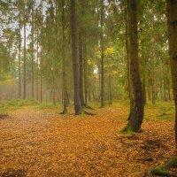 Утро в осеннем лесу :: Виталий Латышонок