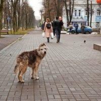 Бездомный пёс. :: Татьяна *