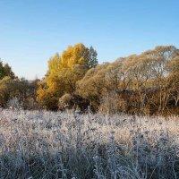 Осень в долине Протвы :: Сергей Курников