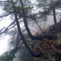 Осень, туманное утро :: IURII