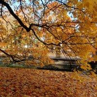 Палитра октября :: Ирина Фирсова