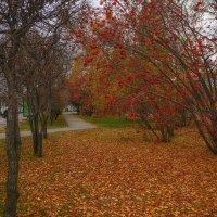 Осень в городе :: Ольга Соколова