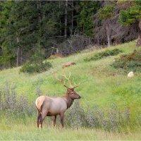 Jasper national park. Canada. :: Alexander Hersonski