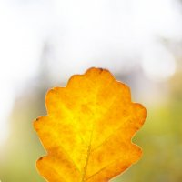 Осенний лист :: Фотограф Ирина Белянина