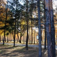 Осень в лесу :: раиса Орловская