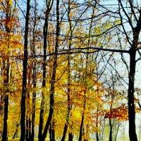 Последние листья золотой осени :: Виталий Латышонок