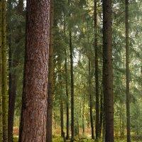 Осень в лесу :: Виталий Латышонок