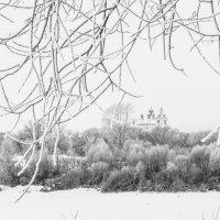 Морозное утро :: Светлана Карнаух