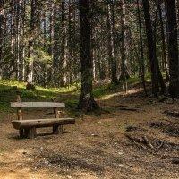 В парке... :: Андрей