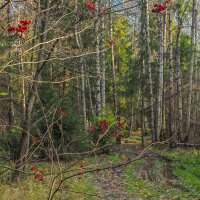 Прогулки в Осеннем Лесу :: юрий поляков