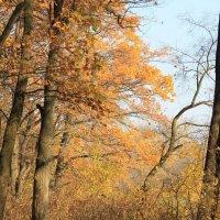 Свежий запах дубовой листвы :: Валерий Хинаки