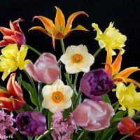 Весенний букет :: Ольга Бекетова