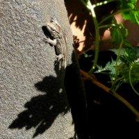 Замерзшая малышка-ящерка отогревается на солнце... :: Лидия Бараблина