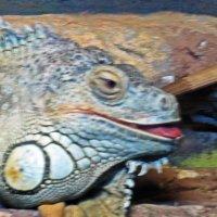 Портрет игуаны :: Лариса