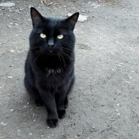Деревенский кот с подпаленными усами :: Зинаида Каширина