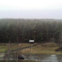 дождливая осень :: Владимир