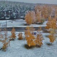 осень    первый снег :: Владимир