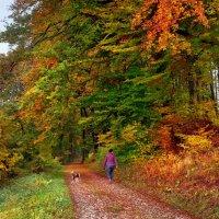 дорога в осень :: Elena Wymann
