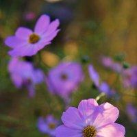 Осенние :: Виолетта